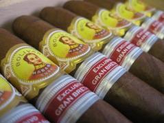 Bolivar Británicas Now Available Across the UK