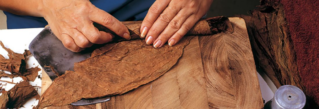 Making a Havana cigar